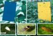 Πώς να Φτιάξετε Οικολογικές Κολλητικές Παγίδες για τα Έντομα των Φυτών