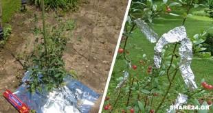 Το Αλουμινόχαρτο Διώχνει Έντομα & Εχθρούς - 7 Έξυπνες Χρήσεις του Αλουμινόχαρτου στον Κήπο