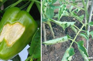 5 Τρόποι για να Προστατεύσετε τα Φυτά Σας από το Στρες του Καύσωνα