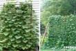 Κάντε αυτή την Εργασία ώστε τα Αγγούρια & οι Κολοκύθιες να Μεγαλώσουν Κάθετα στον Κήπο