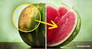 Πώς θα Ξέρετε αν τα Καρπούζια Σας είναι αρκετά Ώριμα για να τα Κόψετε