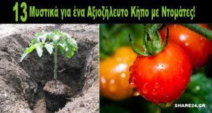 13 Μυστικά για ένα Αξιοζήλευτο Μποστάνι με Ντομάτες!
