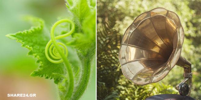Παίζοντας Μουσική για τα Φυτά – Πώς Επιδρά η Μουσική στην Ανάπτυξη των Φυτών