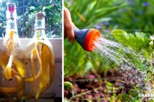 Τα Φυτά Σας είναι Καχεκτικά; Το κόλπο με την Μπανάνα που θα τα Αναστήσει
