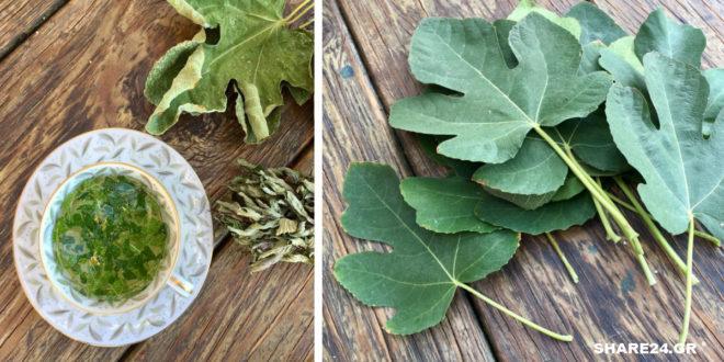 Φύλλα Συκιάς - Οι Θαυμαστές Θεραπευτικές τους Ιδιότητές που Δεν Γνωρίζαμε & Δεν μας είχε Πει Κανείς