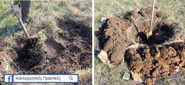Φύτευση οπωροφόρων δέντρων - καθάρισμα περιοχής φύτευσης και άνοιγμα λάκκου