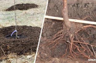 Φύτευση Οπωροφόρων Δέντρων - Τα Μυστικά που Εξασφαλίζουν την Επιτυχία!
