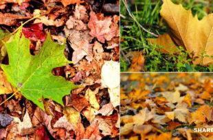 9 Υπέροχα Πράγματα που Μπορείτε να Κάνετε το Φθινόπωρο στον κήπο Σας!