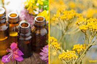 Ελίχρυσος - Γνωρίστε το Φυτό της Αιώνιας Νεότητας! 13 Ιδιότητες που του Δίνουν αυτόν τον Τίτλο!