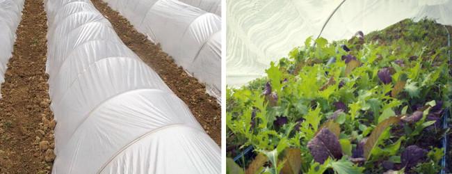 Κατασκευάστε ένα θερμοκήπιο για να προστατεύσετε τα φυτά σας από τον παγετό