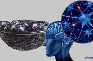 Τα Κύτταρα του Εγκεφάλου μας Μπορούν να Αναγεννηθούν σε Οποιαδήποτε Ηλικία! Δείτε πώς!