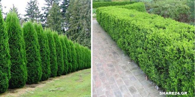 10 Φυτά για Όμορφους Φράχτες που θα Κρατήσουν Μακριά τα Αδιάκριτα Βλέμματα!
