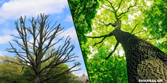 6 Πράγματα που Πρέπει να Κάνετε για να Σώσετε τα Δέντρα Σας!