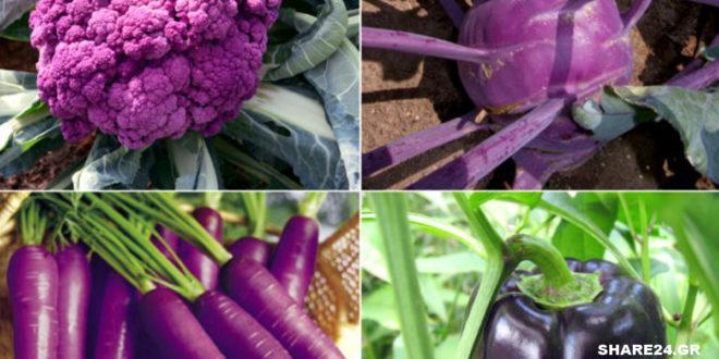 7 Μωβ Λαχανικά που Μπορείτε να Καλλιεργήσετε Εύκολα στον Κήπο Σας!