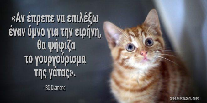 5 Λόγοι για να Ζήσουμε Μαζί με Μια Γάτα, κάτι Αρκετά Τρυφερό αλλά και Θεραπευτικό!
