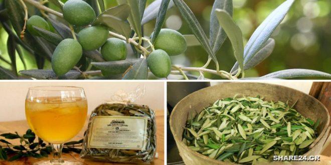 Αυτό το Αφέψημα από Φύλλα Ελιάς θα Σας Δώσει Απίστευτη Ενέργεια & θα Ενισχύσει το Ανοσοποιητικό Σας Καλύτερα από Οτιδήποτε!