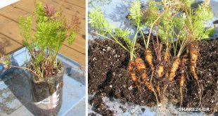 Φυτέψτε Καρότα σε ένα 2λιτρο Μπουκάλι Αναψυκτικού! Μια Απολαυστική Ιδέα που θα Λατρέψουν και τα Παιδιά Σας!