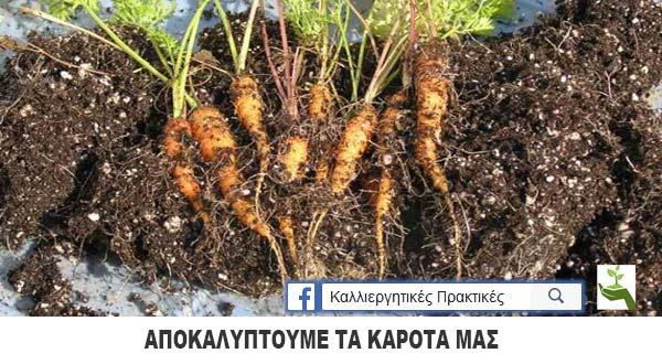 Φυτεύω καρότα σε μπουκάλα αναψυκτικού - Μέσα ανακαλύπτουμε μικρά καρότα