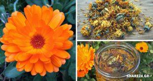 Καλεντούλα - Πώς να Χρησιμοποιήσετε & να Μεγαλώσετε στον Κήπο Σας Αυτό το Θεραπευτικό Φυτό!