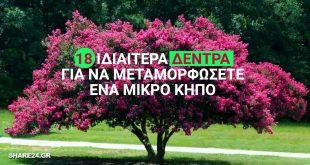 18 Ιδιαίτερα Δέντρα για να Μεταμορφώσετε Ευχάριστα έναν Μικρό Κήπο & την Αυλή Σας !