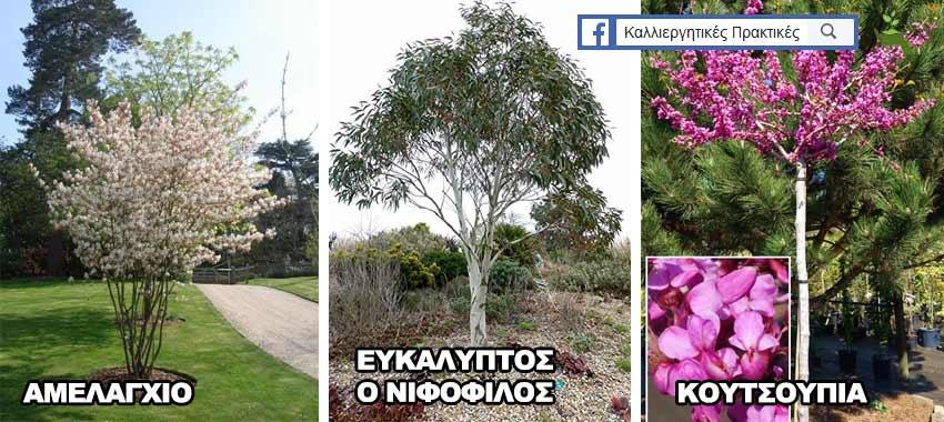 Δέντρα για μικρούς κήπους